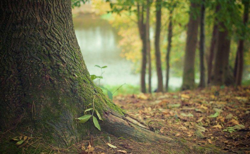 Prześliczny i {estetyczny ogród to nie lada wyzwanie, szczególnie jak jego konserwacją zajmujemy się sami.